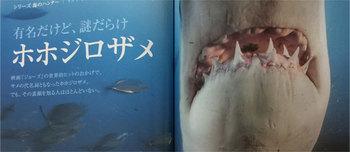 great_white_shark_ngg.jpg
